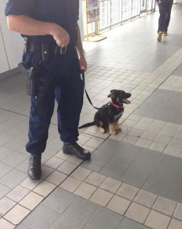 #8 One Day, I'll Be A Big Police Dog - 10 Puppies On Their First Days Of Work That Will Make Your Day