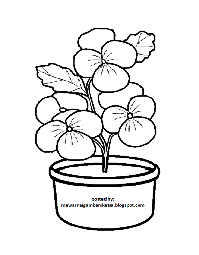 Sketsa Gambar Bunga Di Pot
