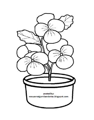 Gambar Mewarnai Bunga Dalam Pot Gambar Mewarnai