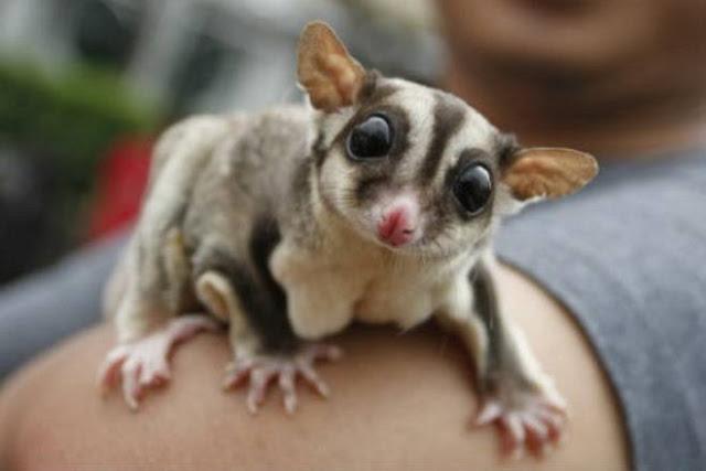 cute exotic pets