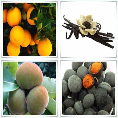Fruit Names Beginning With V