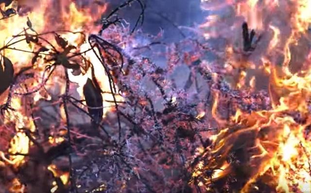faktor penyebab kebakaran hutan
