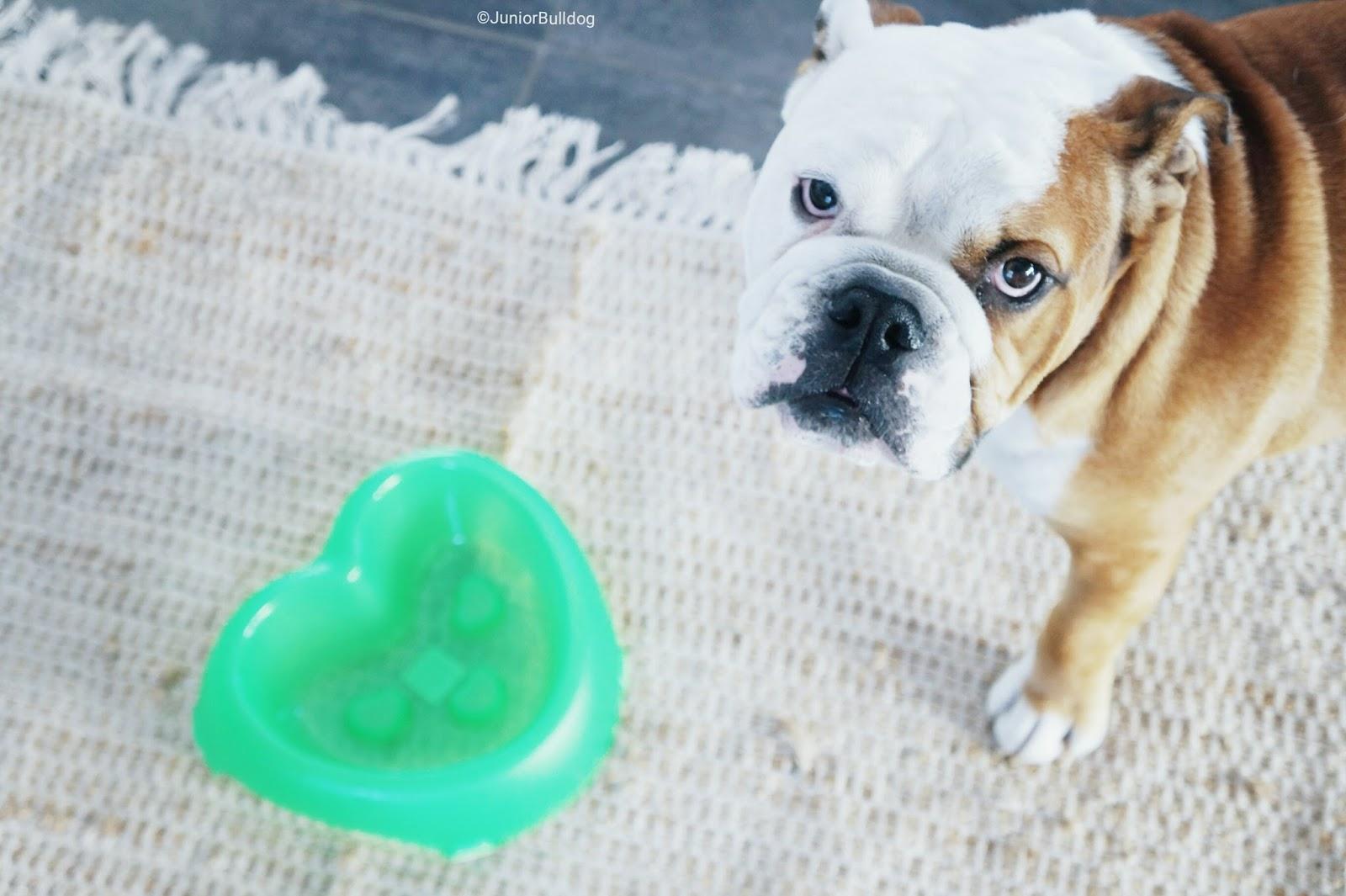 gamelle coeur anti glouton chien