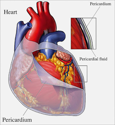 Anatomi Anatomy Jantung cairan perikardium perikardial Pericardium Heart Fluid Friction rub Cardiac tamponade tamponade jantung efusi pericardial