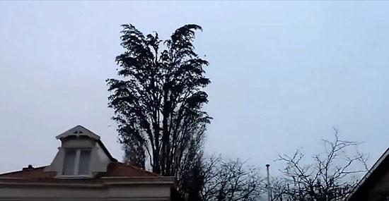 Encontre 1 pássaro nessa árvore - você consegue? - Capa