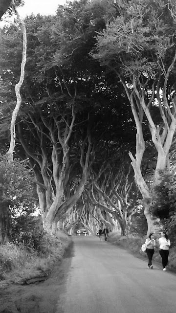 The Dark Hedges in black and white