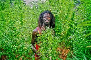 5 Negara Penghasil Narkoba Terbesar Di Dunia