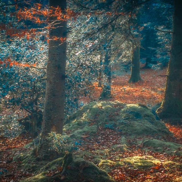 foret ecouves automne