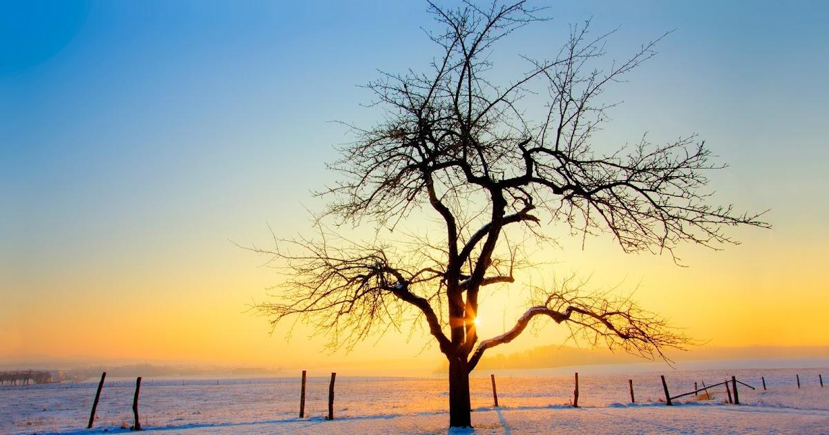 Foto per desktop inverno for Foto inverno per desktop