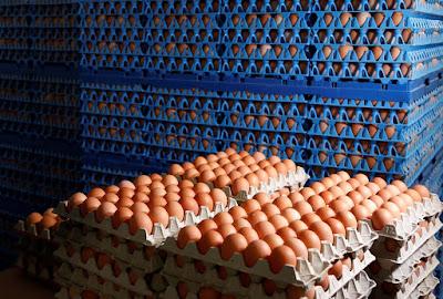 """La investigación del fraude que ha dado lugar a la contaminación de millones de huevos de gallina en Europa por el insecticida fripronil ganó intensidad este jueves en Bélgica y Holanda, donde los directivos de una empresa, en el centro del escándalo, fueron detenidos.  En Holanda, dos directivos """"de la empresa que probablemente aplicó este producto en criaderos avícolas"""" fueron detenidos, según la fiscalía, que no precisó el nombre de la compañía. Pero, según los medios holandeses, se trata de ChickFriend, en el punto de mira de los criaderos afectados.  En Bélgica, se llevaron a cabo 11 registros """"en todo el país"""" en el marco de esta investigación, que ya implica a 26 personas y empresas sospechosas, según la fiscalía de Amberes (norte).  Precisa que """"cerca de 6.000 litros de productos prohibidos"""" -de fipronil según los medios- fueron incautados en julio en una empresa belga. La justicia no ha detallado de qué compañía se trata, pero fue identificada como el distribuidor de productos sanitarios para criaderos Poultry-Vision, en el origen del escándalo junto a ChickFriend, según los medios.  El dirigente de Poultry-Vision compareció en julio y luego """"fue liberado bajo estrictas condiciones"""", precisó la fiscalía, que """"se toma los hechos muy en serio, en vista de su gravedad, su amplitud, su carácter organizado y su contexto internacional"""".  – Nueve países afectados –  Las operaciones se produjeron mientras que esta crisis sigue preocupando a las autoridades sanitarias europeas, pese a que los riesgos para la salud del consumidor sean, 'a priori', limitados.  El escándalo se originó a raíz del uso del fipronil, un insecticida estrictamente prohibido en los criaderos de gallinas, por parte de compañías de desinfección que trabajaban en explotaciones agrícolas de Holanda, Bélgica y Alemania.  Desde que Bélgica alertara a sus socios europeos, el 20 de julio, decenas de gallineros han sido bloqueados. Millones de huevos contaminados llegaron a nueve países europeos, de c"""