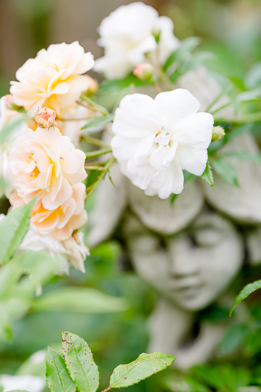 Gartenimpressionen im August, Pomponetti, Ghyslaine de Feligonde