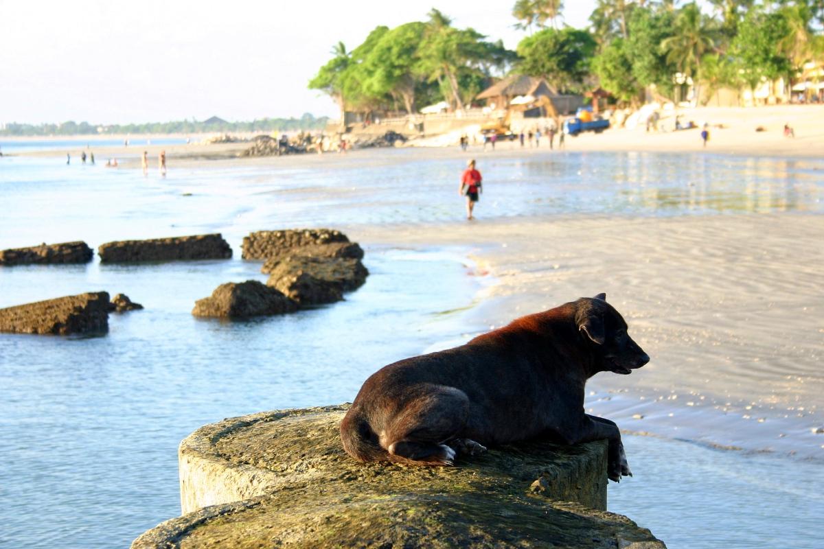 해변의 개