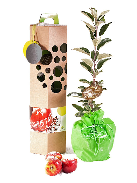 id es cadeaux un arbre offrir id e cadeau originale pour no l. Black Bedroom Furniture Sets. Home Design Ideas
