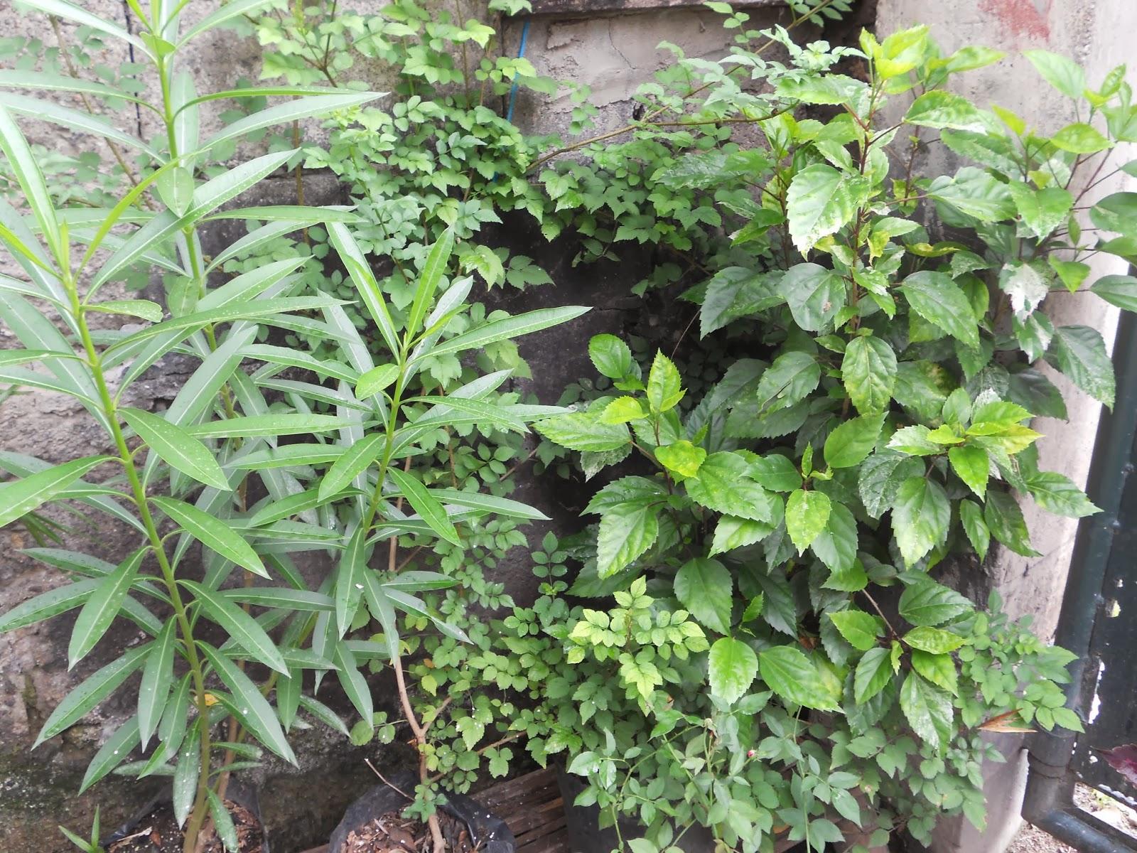 my container garden