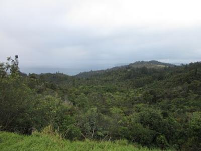 Paisaje cerca de Tairua. Península de Coromandel, Nueva Zelanda