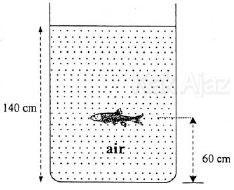 Tekanan hidrostatis yang dialami oleh ikan yang berada dalam bak air