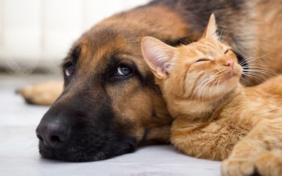 Кошки умнее собак, собаки умнее кошек, дикие животные умнее домашних, исследования, учёные определили, наука, биология