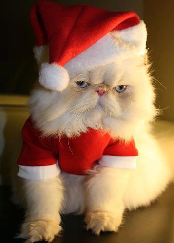 gato vestido disfrazado SantaClaus