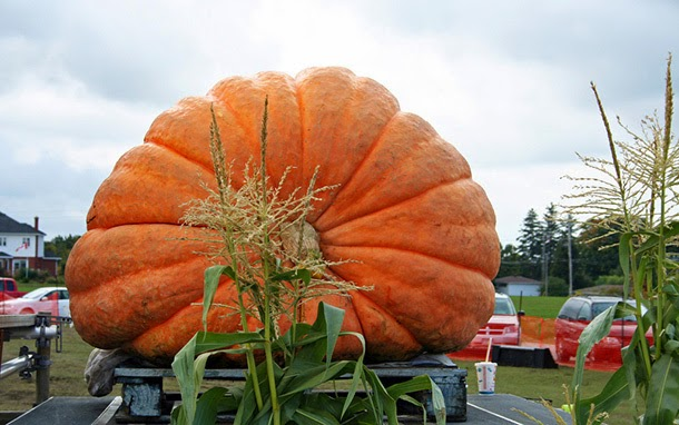 Image result for Heaviest pumpkin 1,810 lb 8 oz