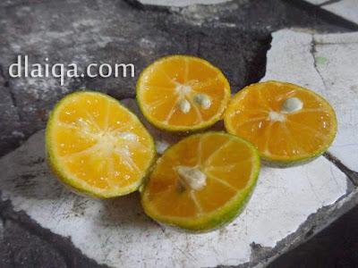 jeruk kunci