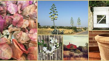 Flores, plantas, jardines y cosas de verano en mi Instagram