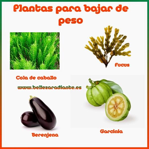 Plantas naturales para bajar de peso rapidamente