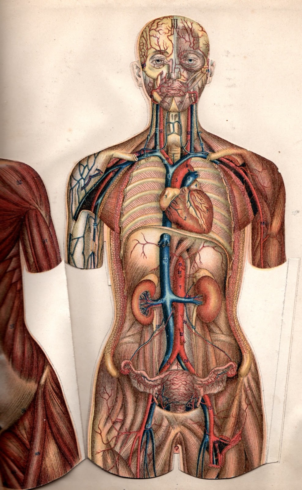 What Is Anatomy Online Paramedical Courses