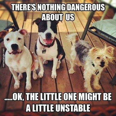 There´s nothing dangerous about us. Funny Dog Pictures