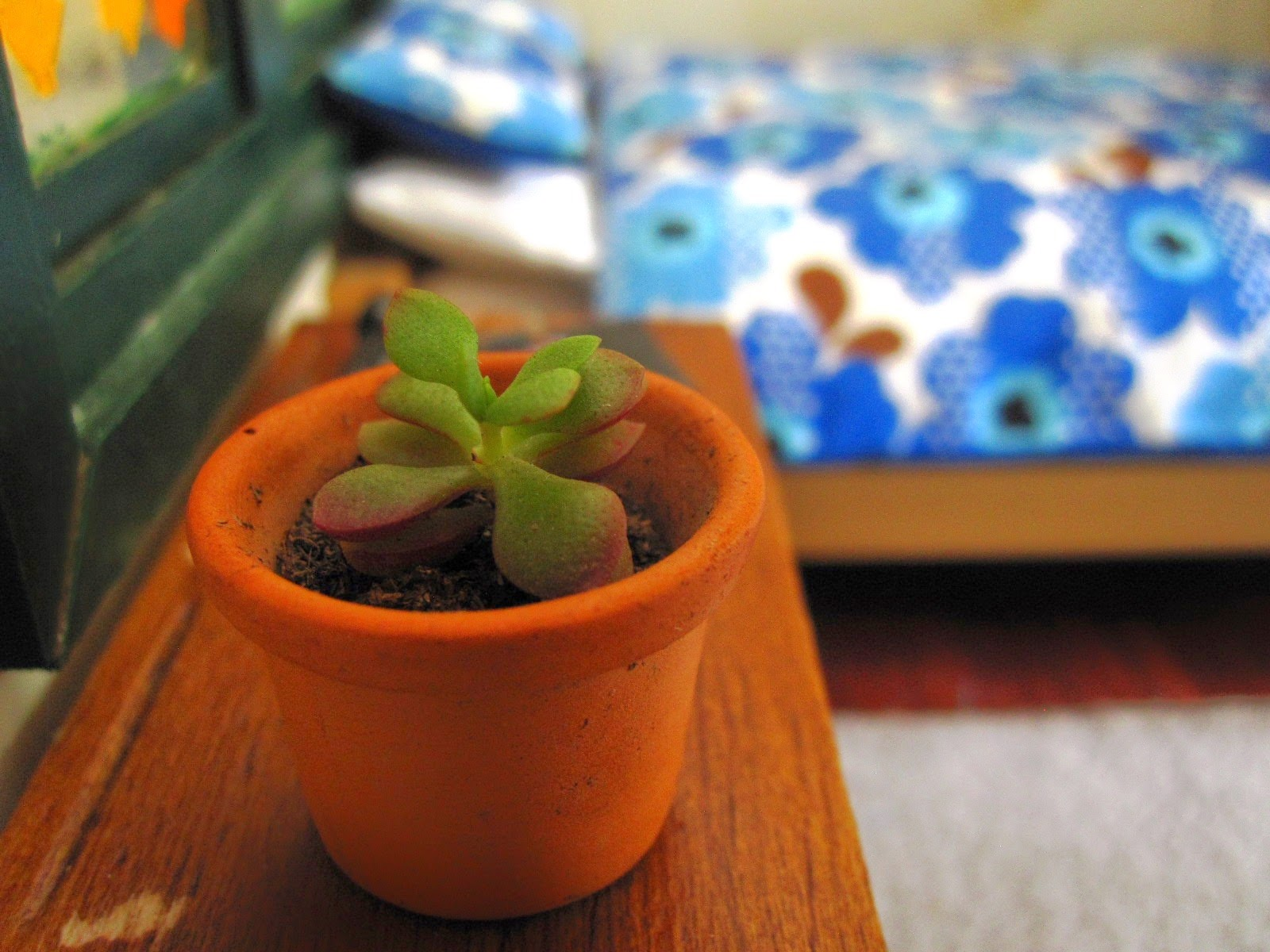 Miniature succulent in a pot on a table in a dolls house bedroom.