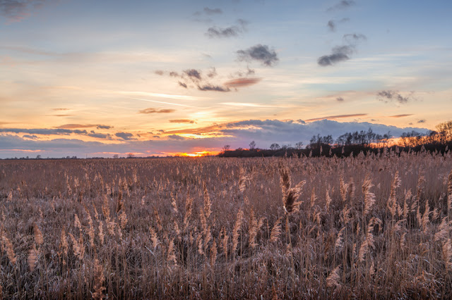 Sedge Fen at Wicken Fen Nature Reserve at sunset