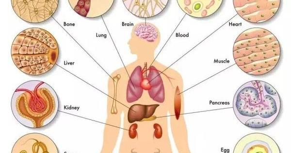 心怕咸,腎怕肉,血管怕激!這樣艾灸可保養全身器官(人體免疫力)