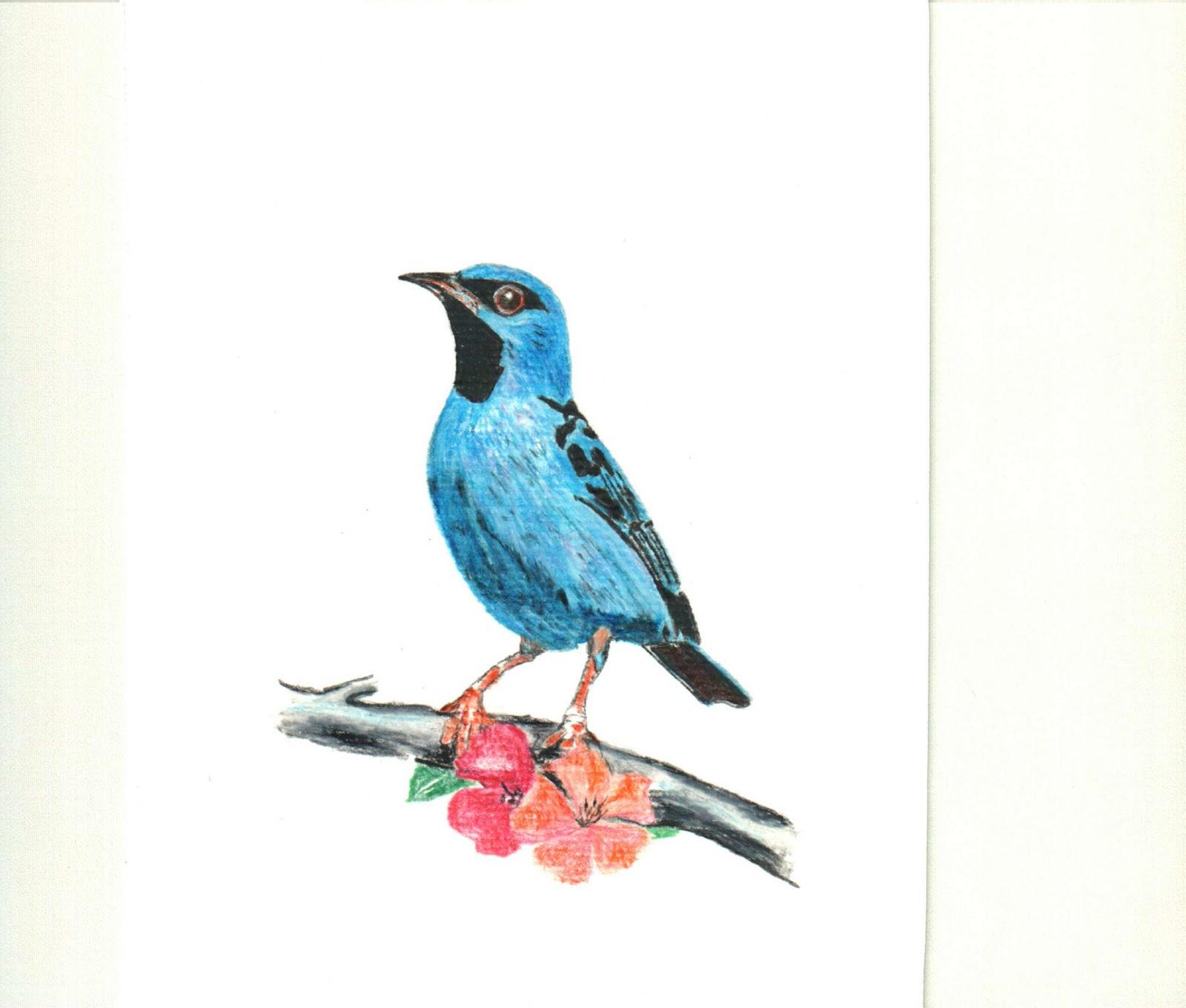 Gicelio Franco: Pássaros desenhados com lápis de cor