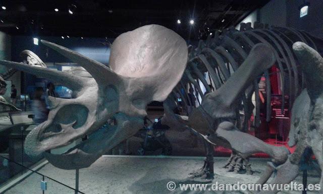 Esqueleto de Triceratops en el Field Museum. Chicago