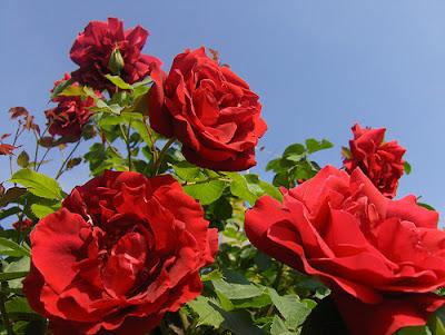 Confira As 5 Flores Mais Lindas Instituto Rio Itariri