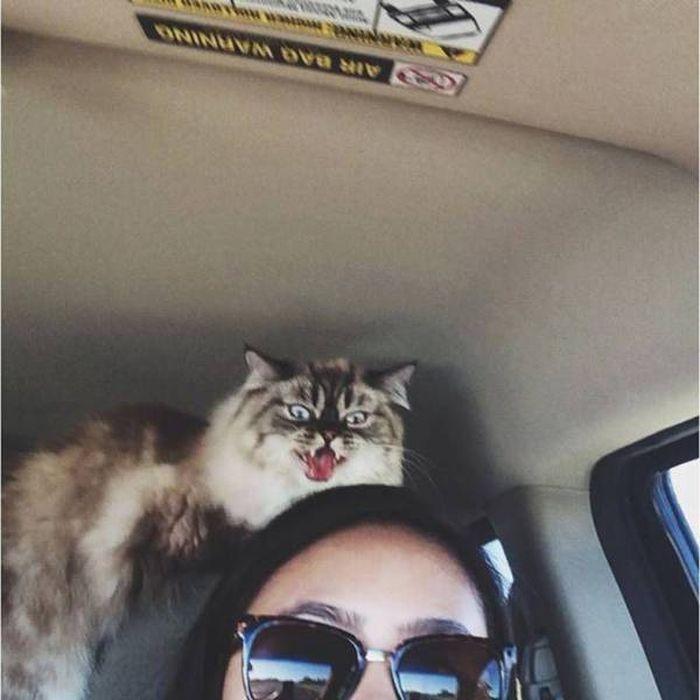 Funny cats - part 311, cute cat image, funny cat photos