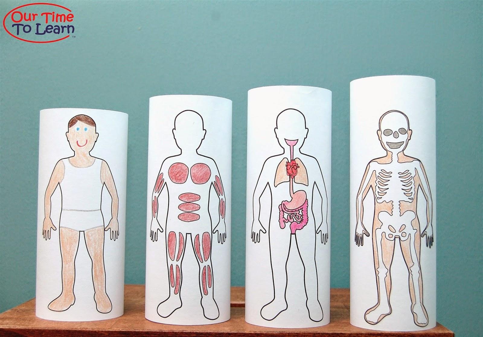 Atividades Corpo Humano Beda 8