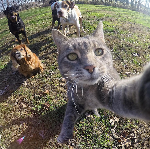 Manny, the cat addicted to selfies