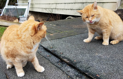 2 Orange Ginger cats photographed with Samsung Galaxy S7 Edge mobile photography