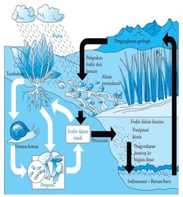 Siklus Fosfor.