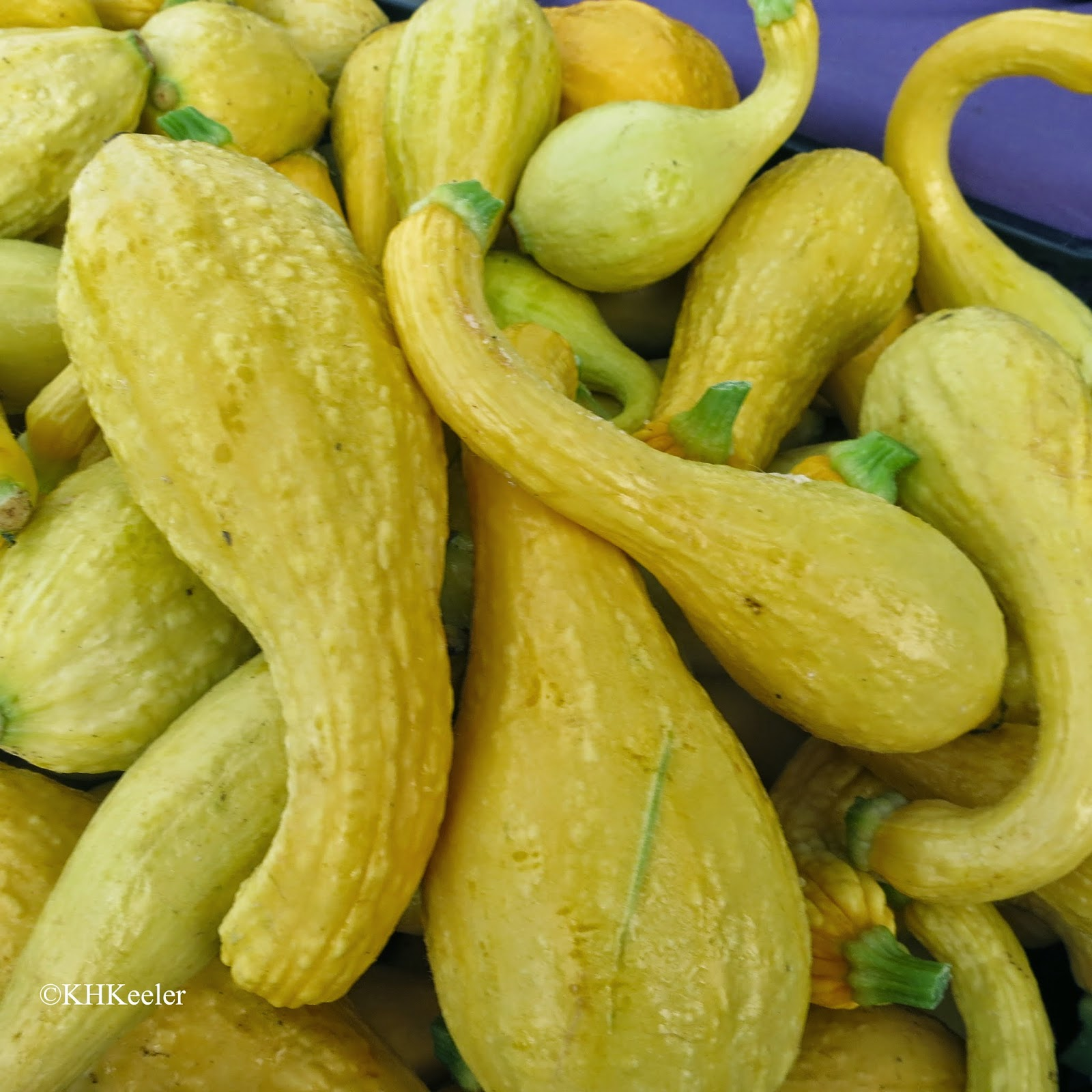 crook-neck squash
