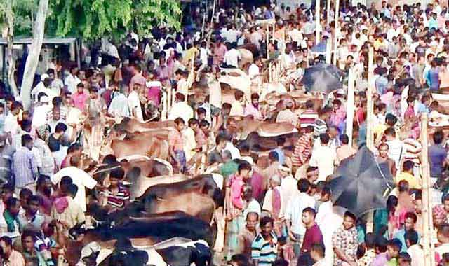 The animal hut of the sacrificial animal has been raised in Gaibandha