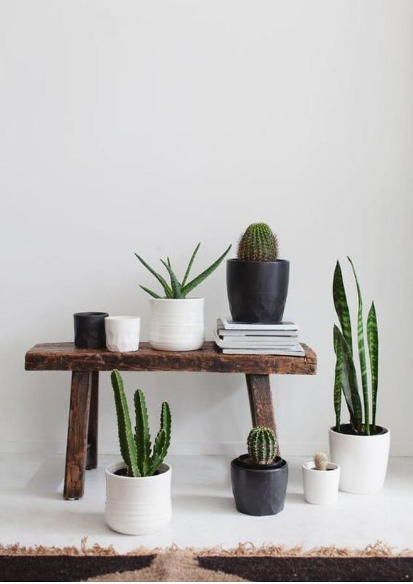 Ces plantes la mode aurelieleee for Arrosage plante hiver