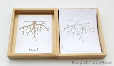 Parts of a root learning activities and free printables.