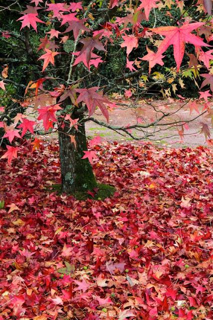 couleurs d'automne, feuilles, arbres, Jean-Yves Le Du