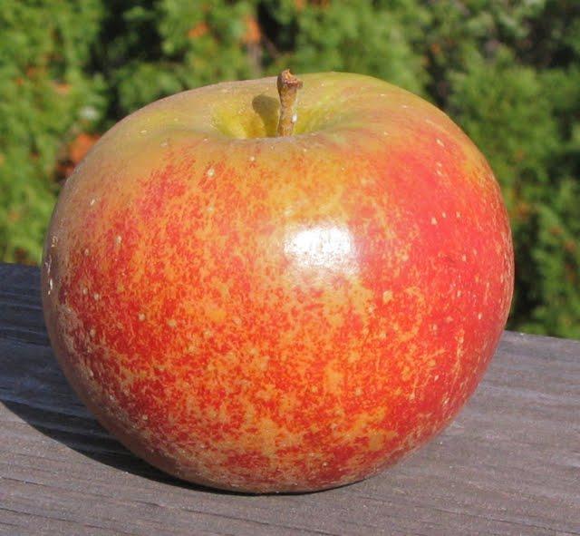 plumac apples