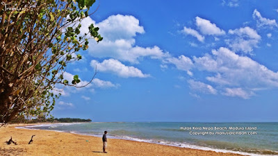 Pesona Alam Sempurna Pantai Hutan Kera Nepa
