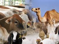 Syarat dan Jenis Zakat Binatang Ternak