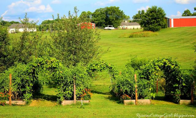 #Garden #GrowYourOwnFood #Chickens #RaisedBeds #OrganicGardening #Tomatoes #greenbeans #cattlepanels #Veggies #Overalls #Farmlifestyle #Farm