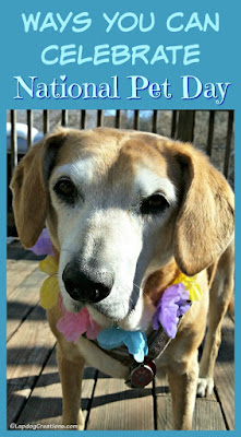 rescued senior hound mix dog