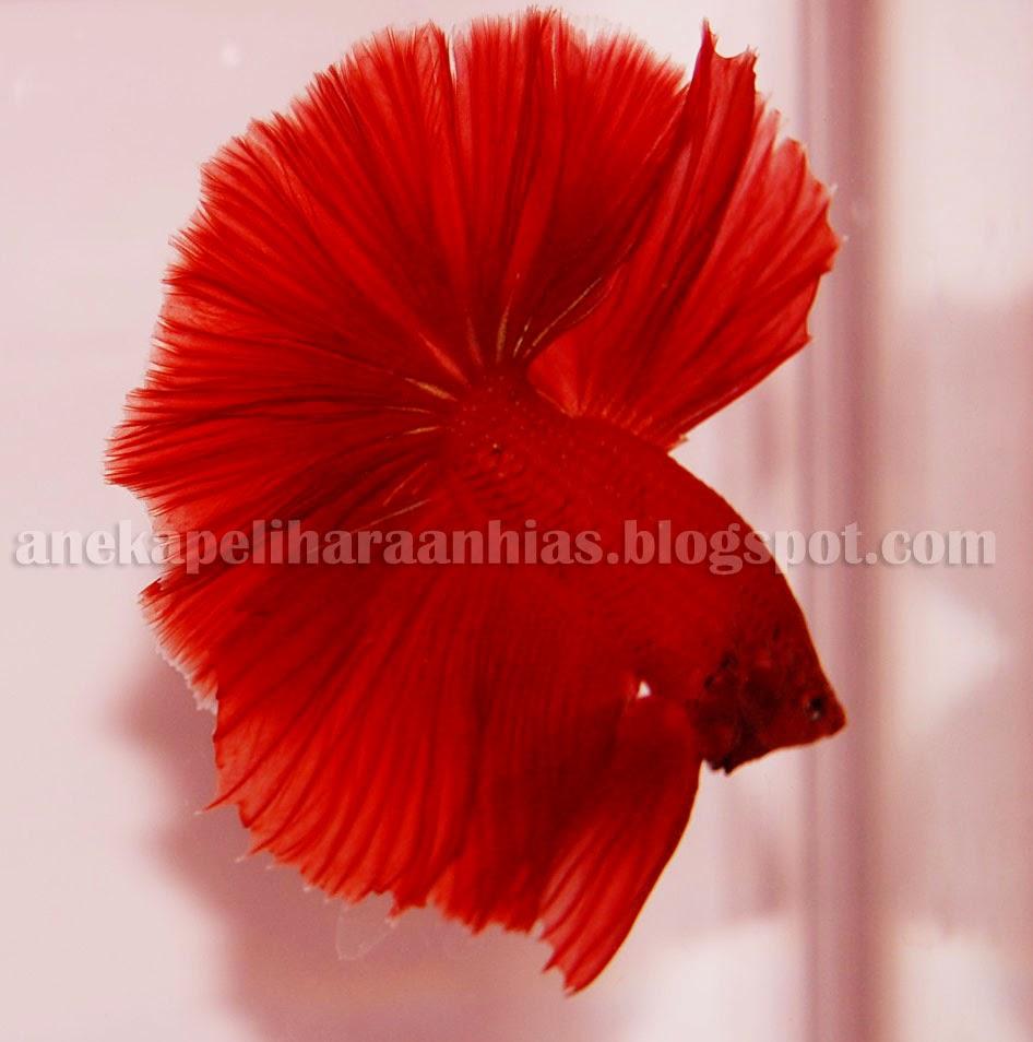 43 Gambar Rangka Hewan Burung HD